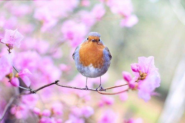 Primavera poesie